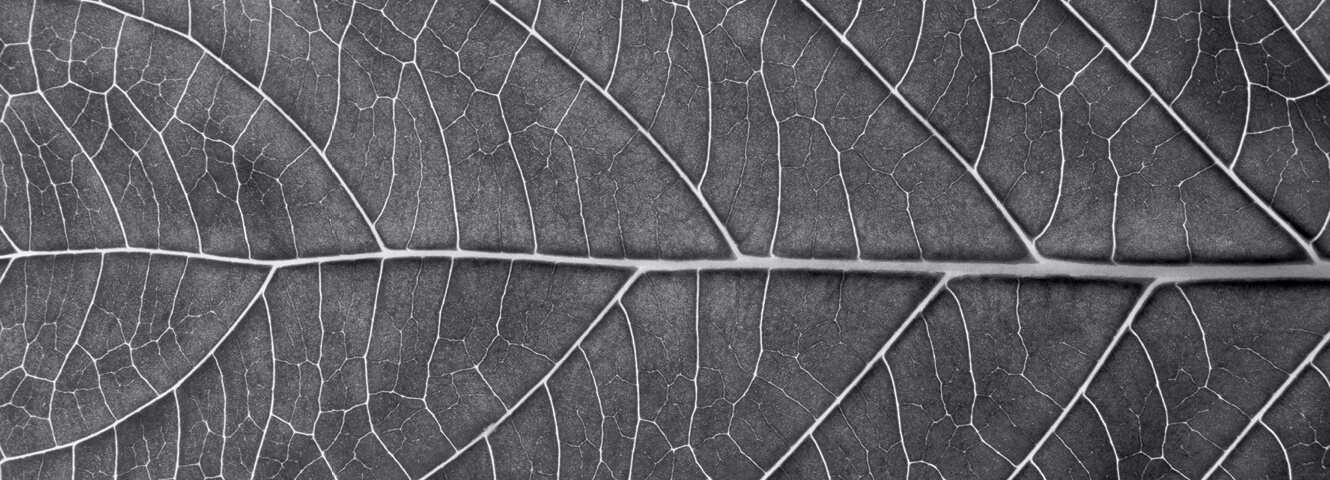 A detailed image of a horizontal leaf and its cells
